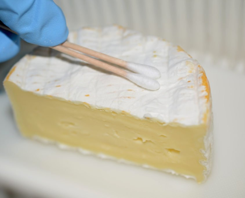 SonoSteam testing Brie Moldy cheese