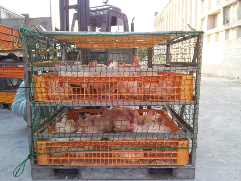 chicken crates