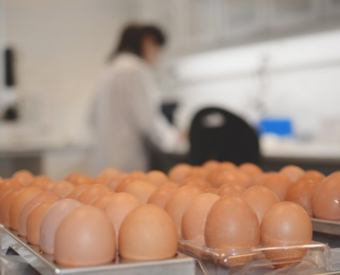 Egg contamination in laboratorie